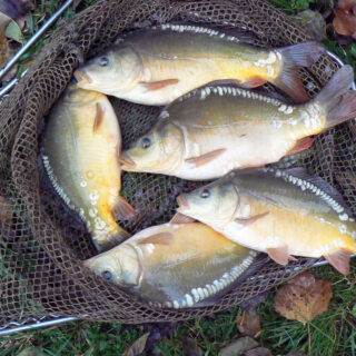 Fisch aus oberfränkischen Teichen