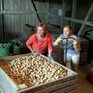 Kartoffeln alter und neuer Sorten aus Oberfranken