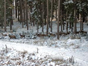 Wildbret aus oberfränkischen Wäldern