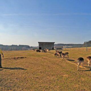 Förstenreuther Bauernlädla, Stammbach