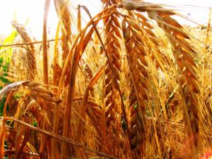 Landwirtschaft in Oberfranken