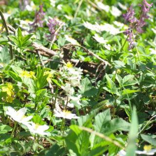 Bischofsgrün: Kräutersammeln für die Gründonnerstagsuppe