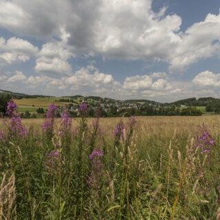 Bobengrün: Wanderung durch das Froschbachtal
