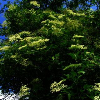 Fichtelgebirge (Naturpark): Pflanze des Monats
