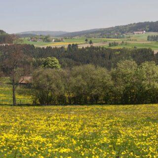 Frankenwald: Erlebnis Frankenwald-Küche