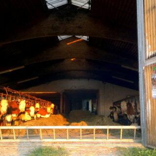 Goldkronach: Kräuter(ver)führungen mit Heike Ehl