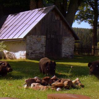 Grassemann: Erlebnistag im Freilandmuseum