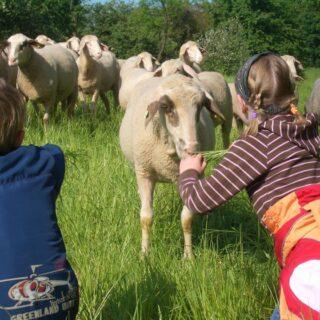 Heinershof in Stolzenroth: Lernen mit Kopf, Herz und Kartoffel