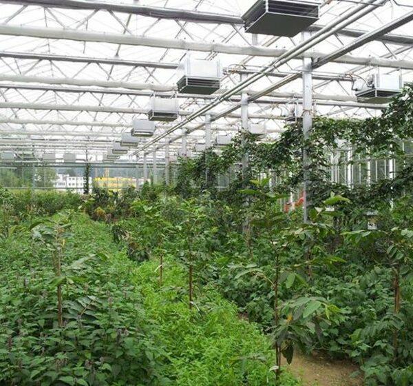 Kleintettau: Das Tropenhaus 'Klein-Eden'