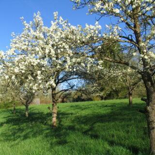 Landkreis Bamberg: Zum traditionellen Apfelmarkt