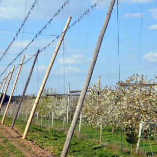 Lilling: Landerlebnis Hopfenbauernhof