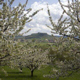Pretzfeld: Auf dem Kirschenweg
