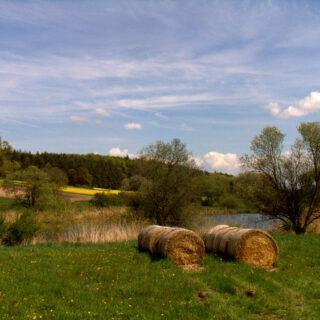 Steigerwald (Naturpark): Karpfenteiche - kleine Naturparadiese