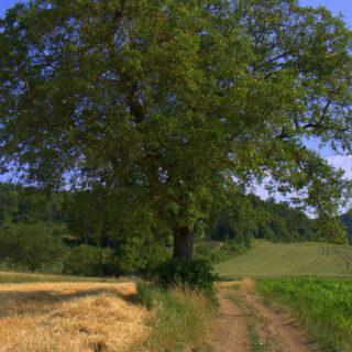 Uetzing: Ins Land der Nüsse